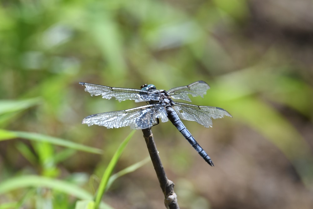 black and white dragonfly on brown stem during daytime