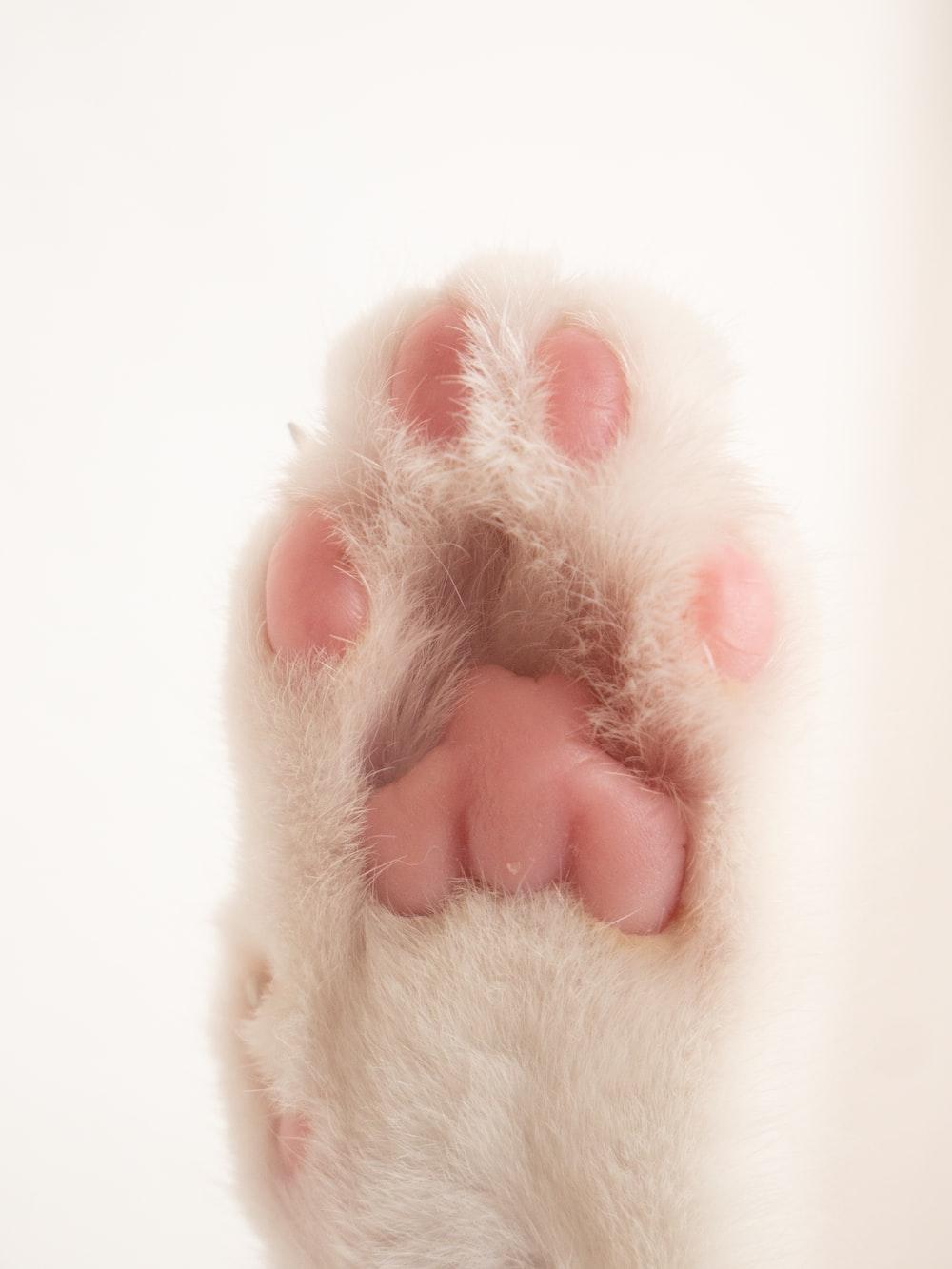 person holding white fur animal