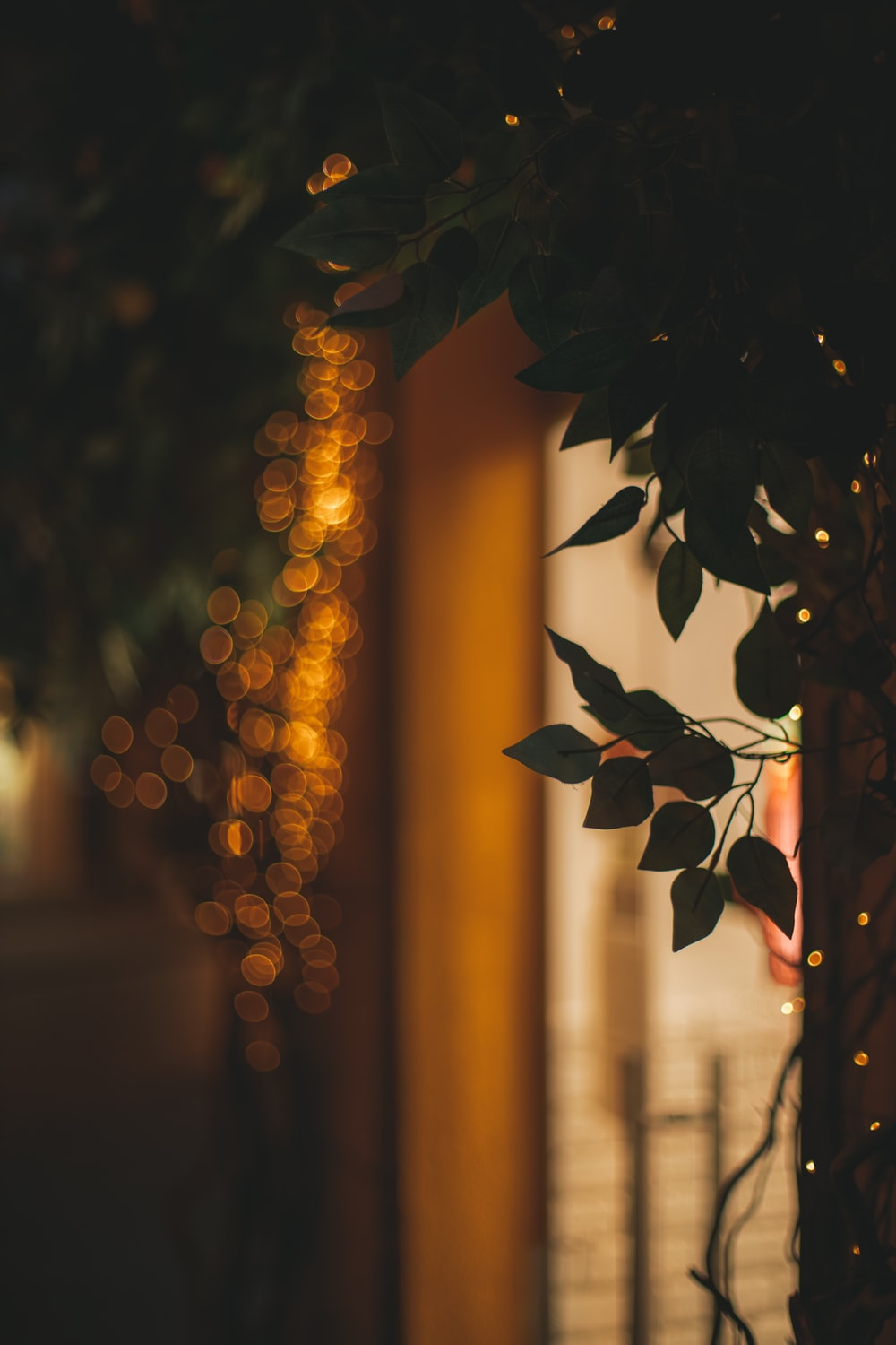 green leaves with bokeh lights