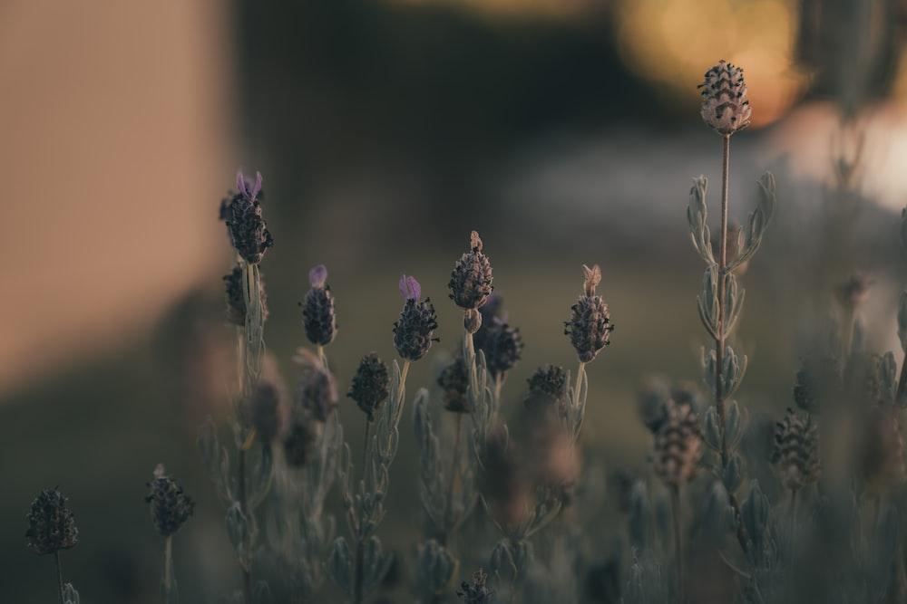 brown and purple flowers in tilt shift lens