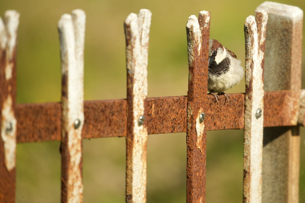 white and black bird on brown wooden fence