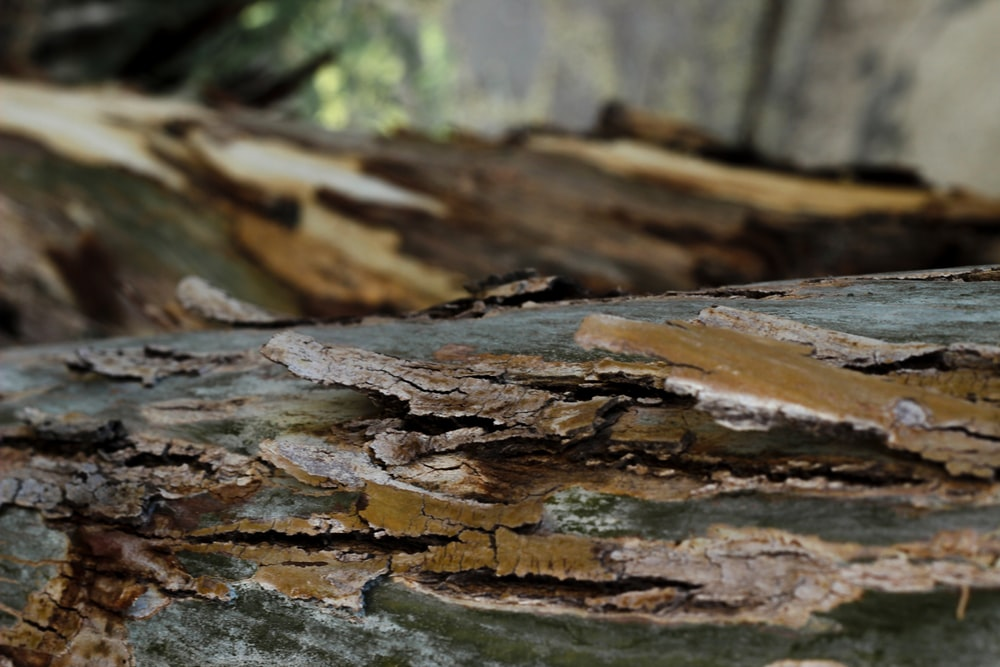 brown and white wood log