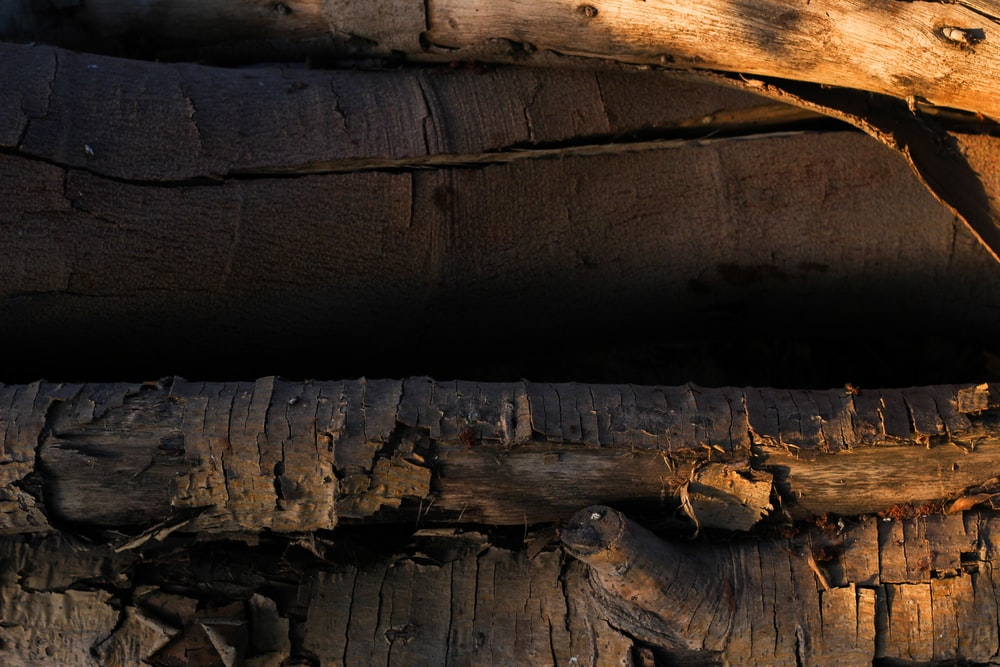brown and gray wooden log