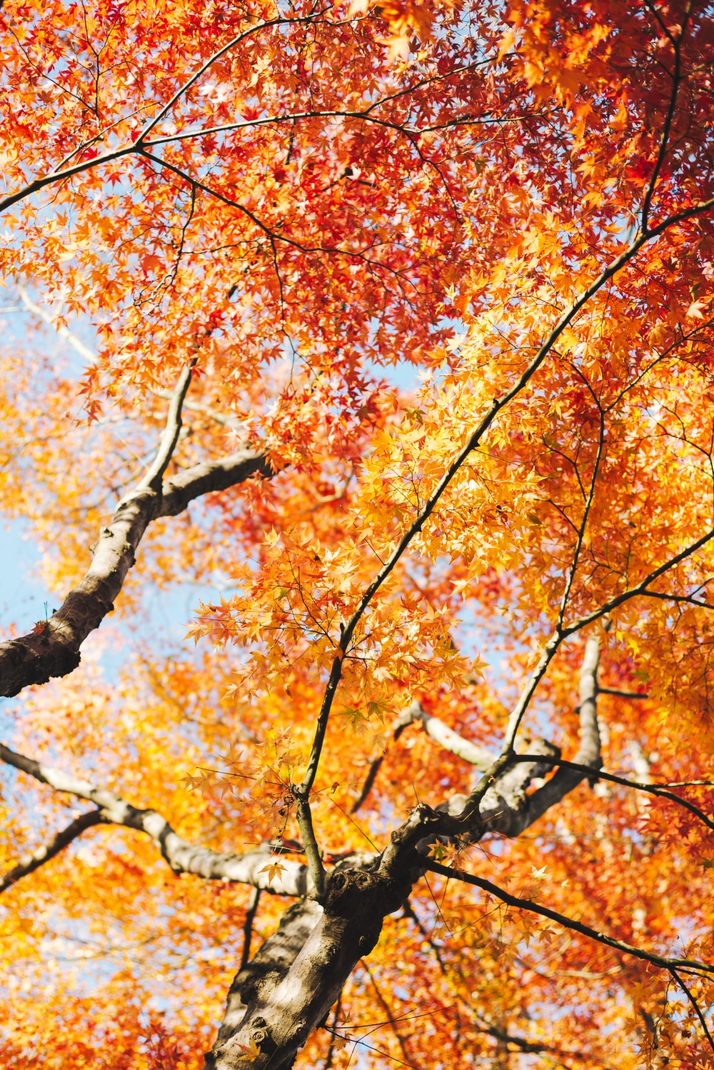 brown and yellow leaves tree