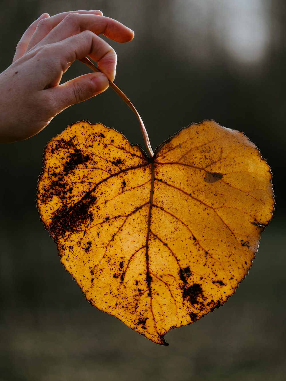 person holding yellow leaf during daytime