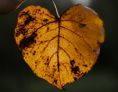 brown and yellow leaf in close up photography