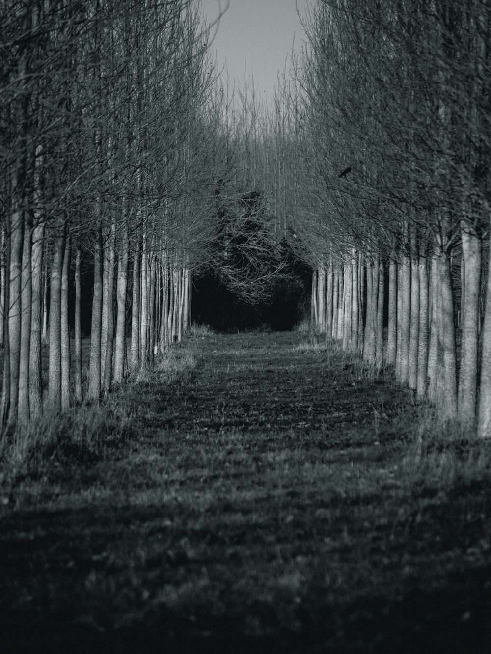 grayscale photo of trees on forest