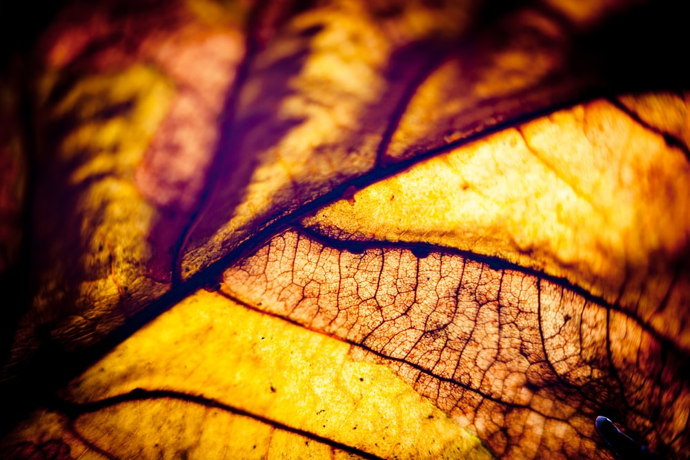 yellow and green leaf in close up photography