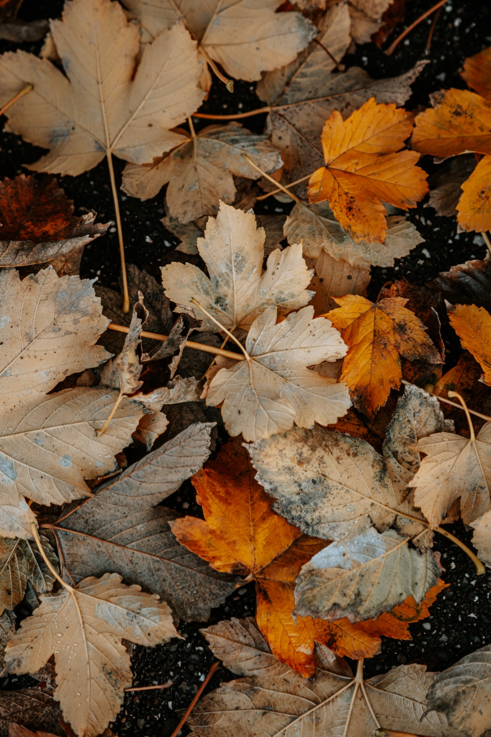 brown and gray leaves on ground