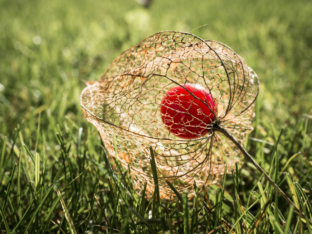red and white egg on brown wicker basket on green grass field during daytime