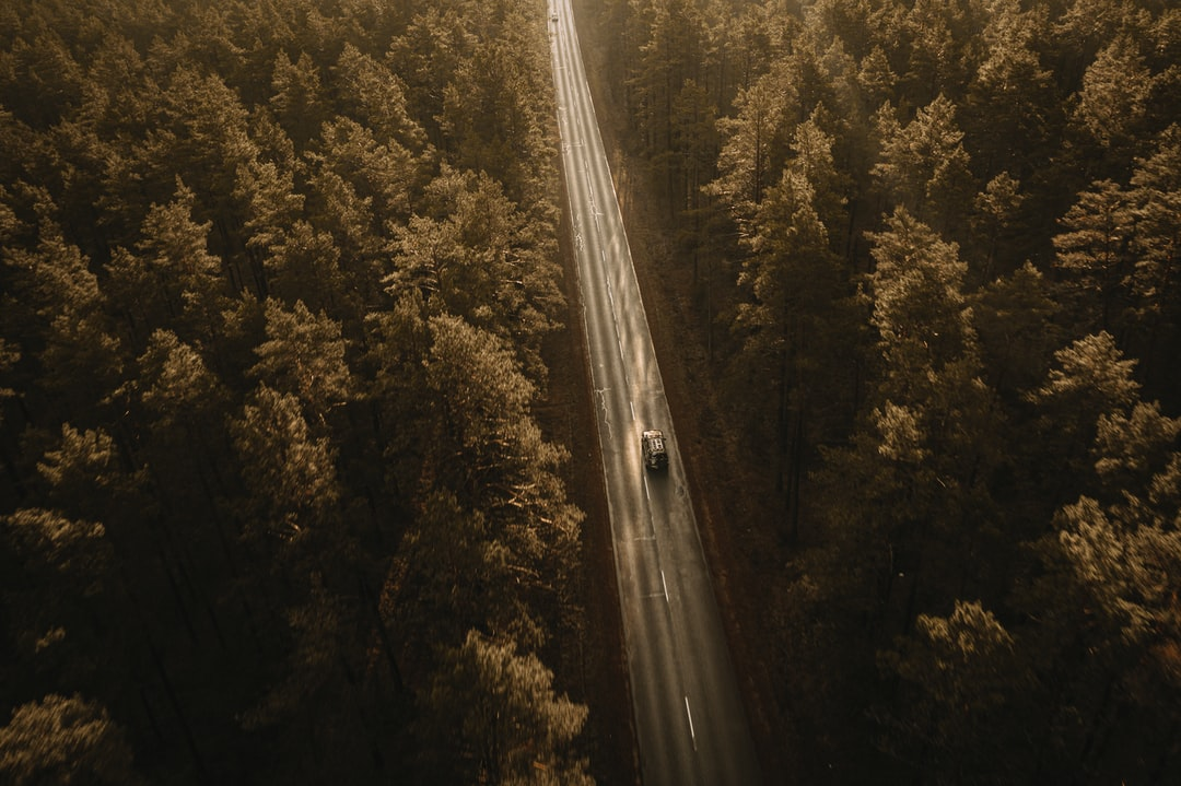 Aerial View of Road In the Middle of Green Trees - unsplash
