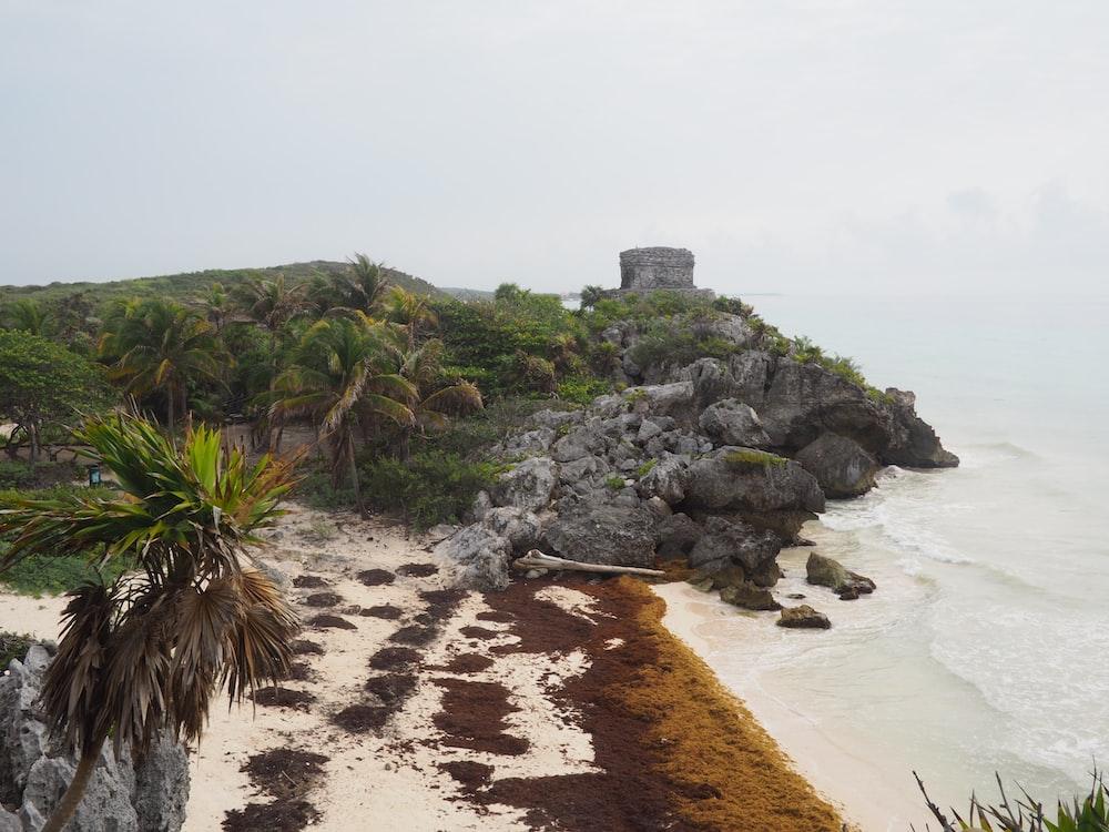 green trees on brown sand beach