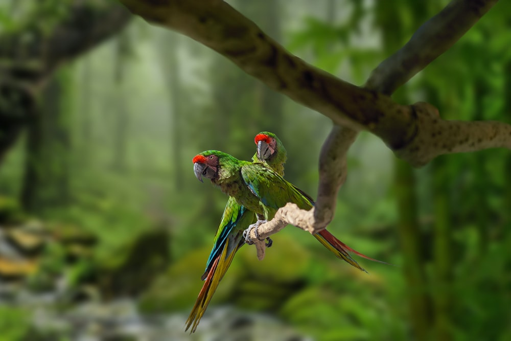 green red and blue parrot on brown tree branch