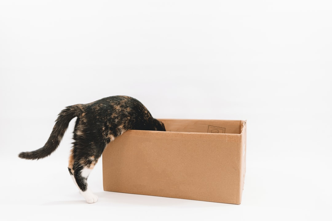 My Cat Oatly Entering A Cardboard Box With A White Background. - unsplash