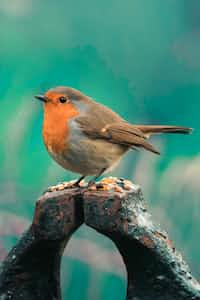 Little Robin poetry stories