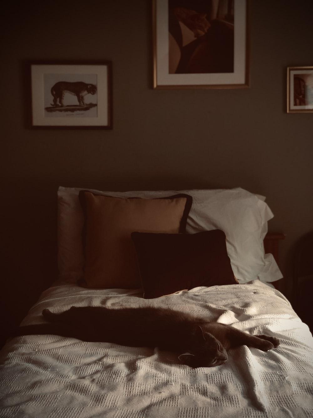black throw pillow on brown sofa