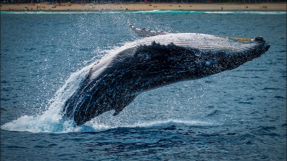 black and white whale tail on blue ocean water during daytime