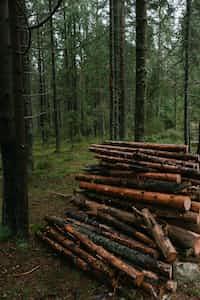 Lumber  lumber stories