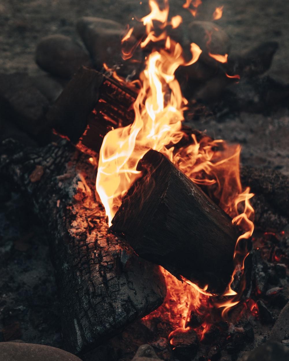 fire on brown wood log