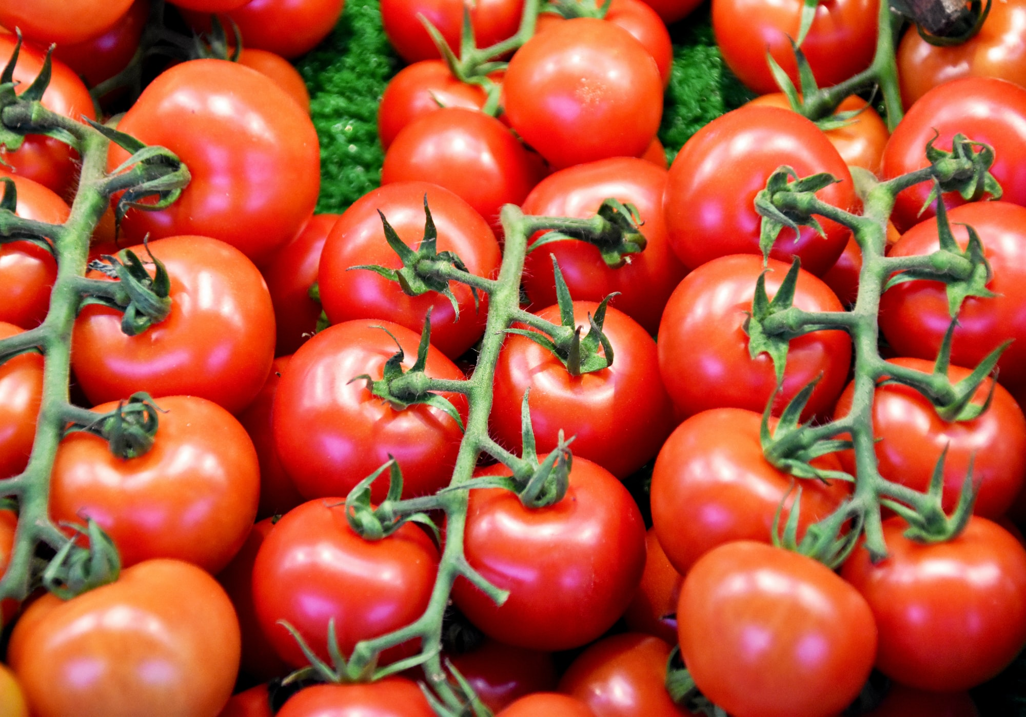 red tomatoes at the market stand