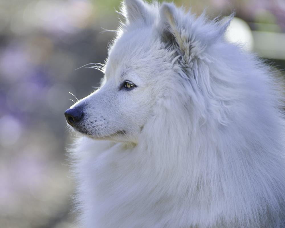 white long coated dog in tilt shift lens