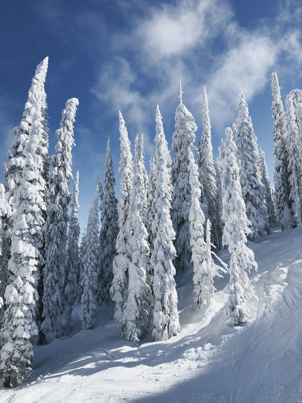 snow covered trees under white clouds and blue sky during daytime