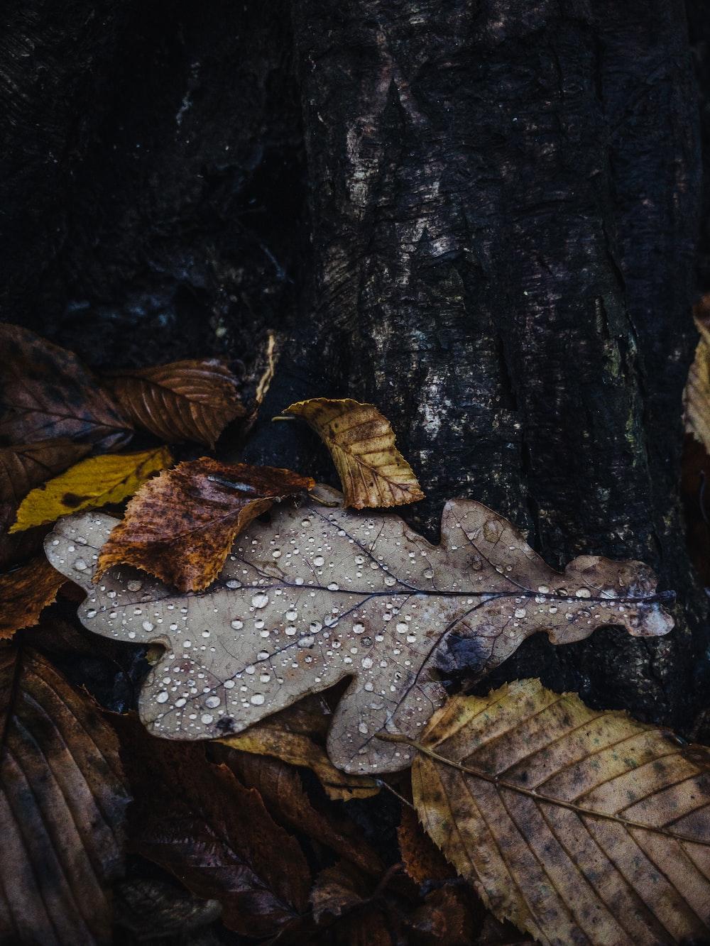 brown dried leaf on black tree trunk
