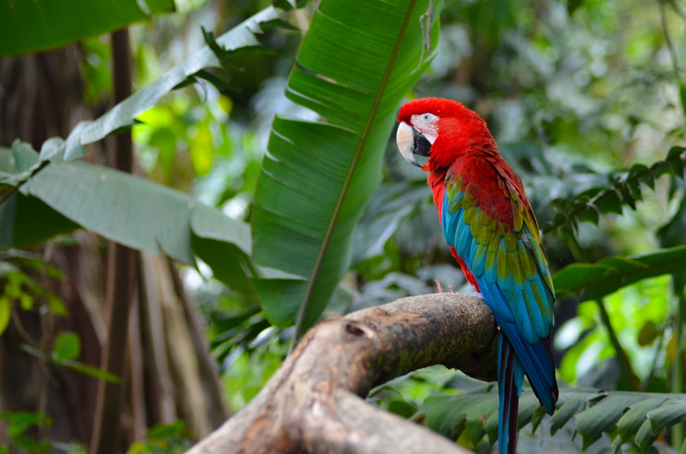 red green and blue parrot on brown tree branch during daytime