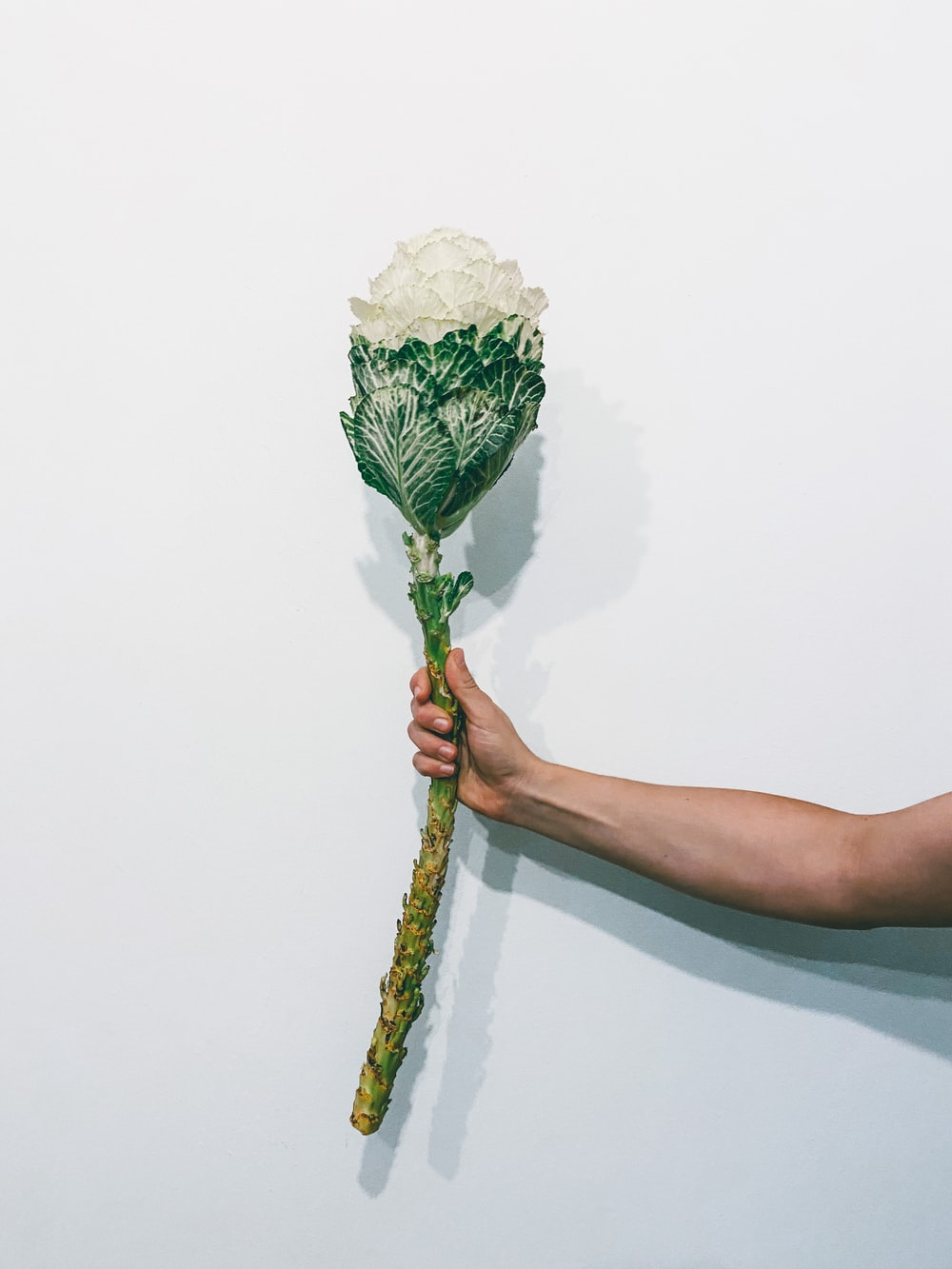 person holding white and green bouquet