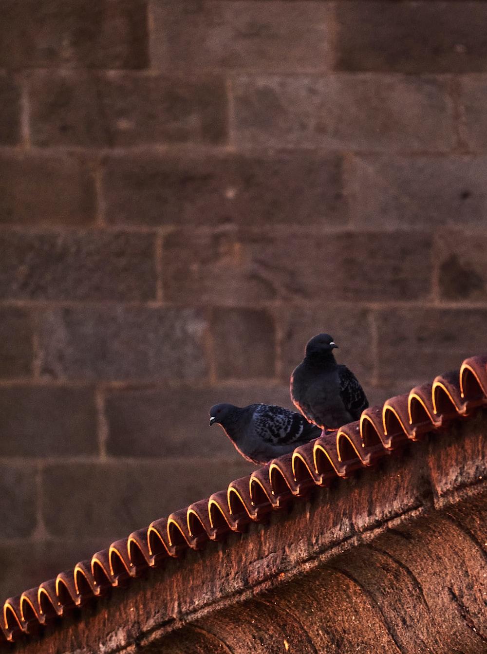 black bird on brown concrete wall during daytime