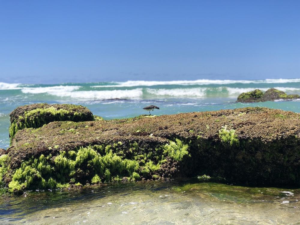 green grass on seashore during daytime