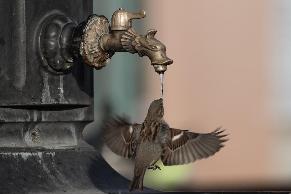 brown bird flying over black metal water fountain