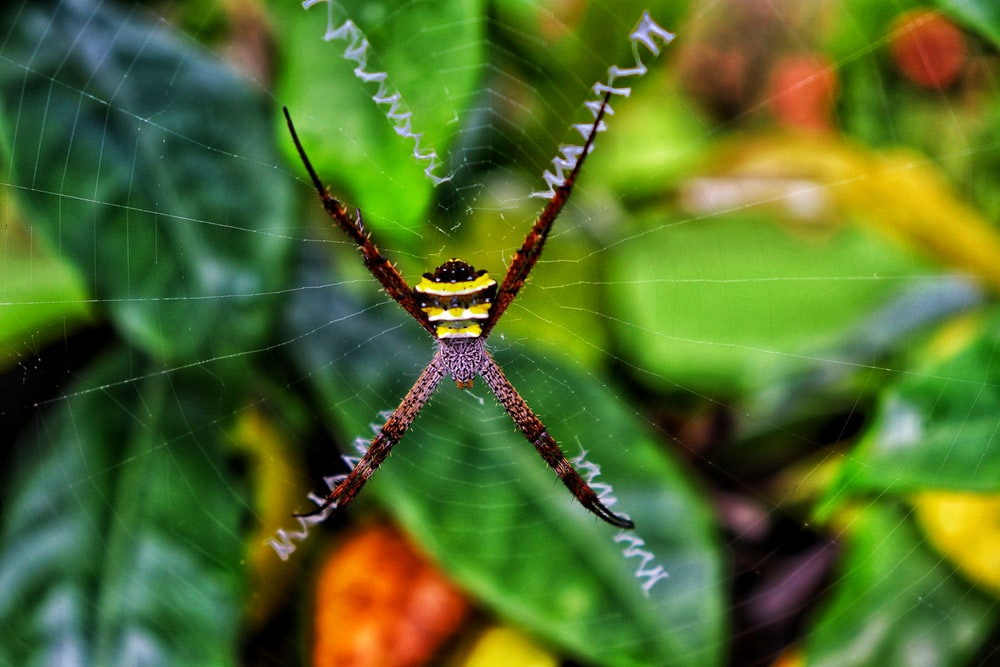 yellow and black spider on web in close up photography during daytime