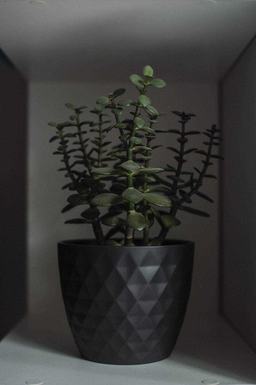 green plant on brown and black ceramic vase