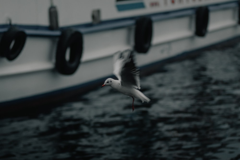 white bird on blue and white boat during daytime