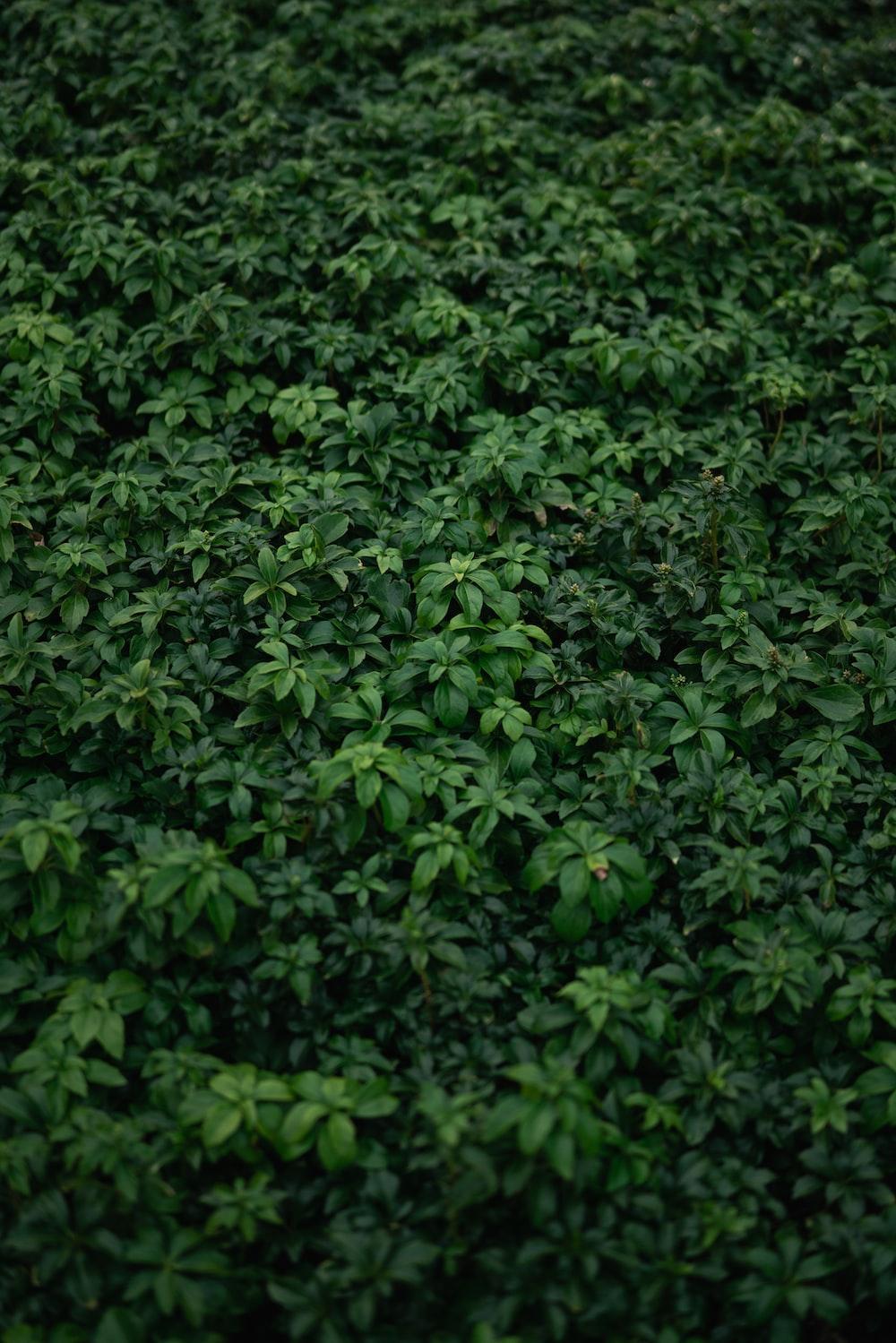 green leaves on brown soil