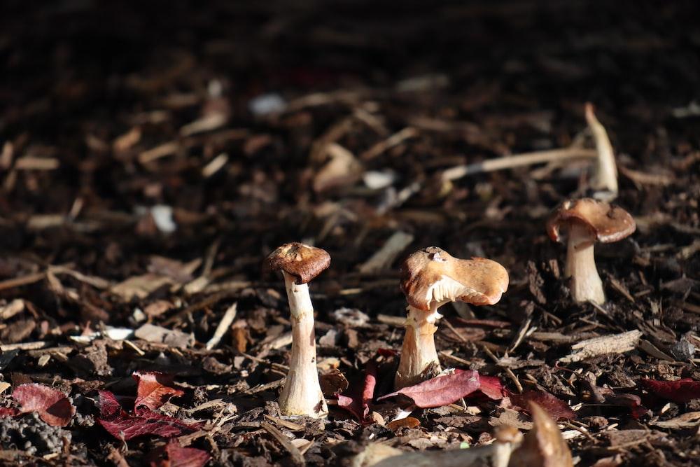white and brown mushroom on ground
