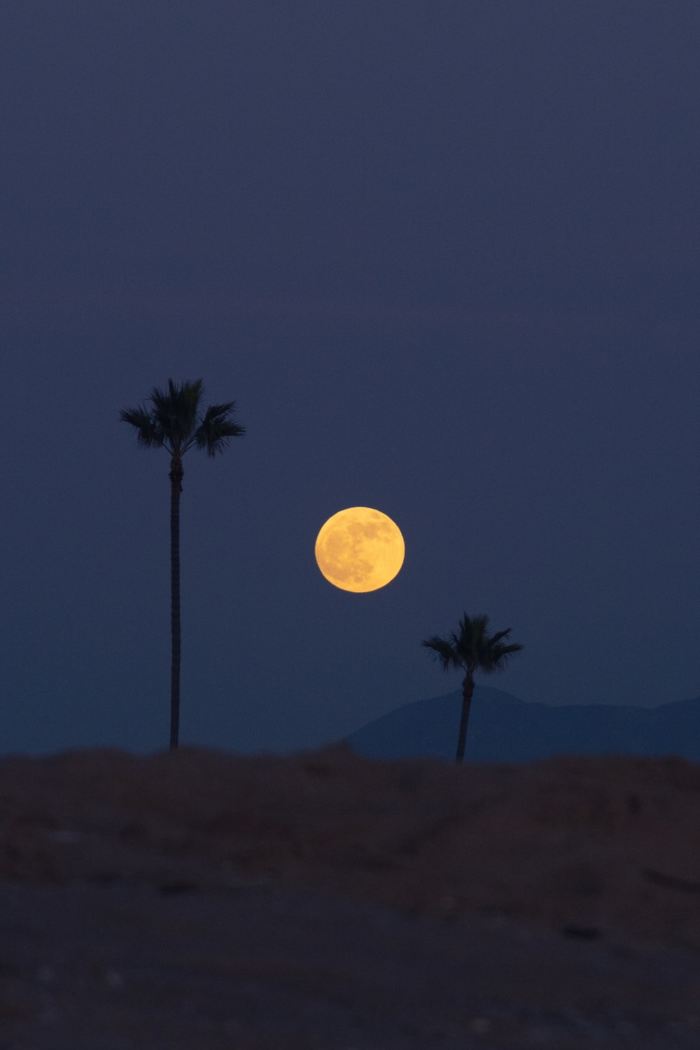full moon over the palm trees