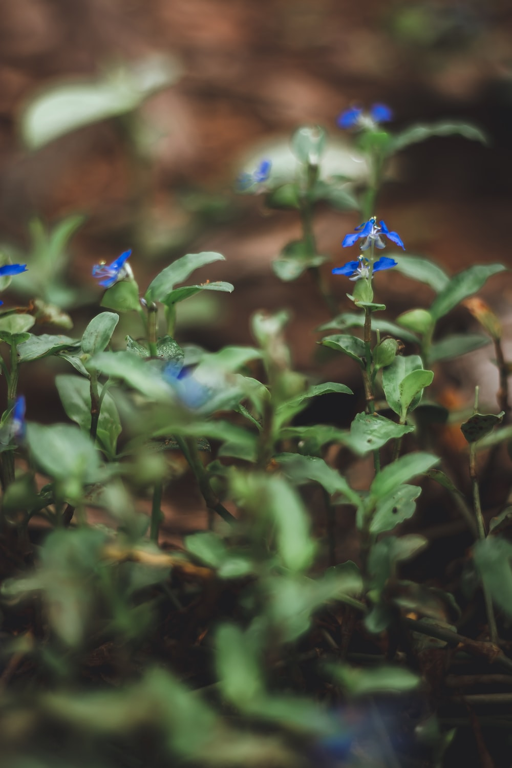 blue flower with green leaves