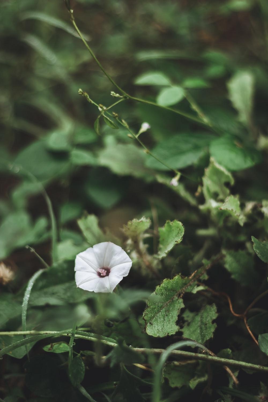 white flower in green leaves