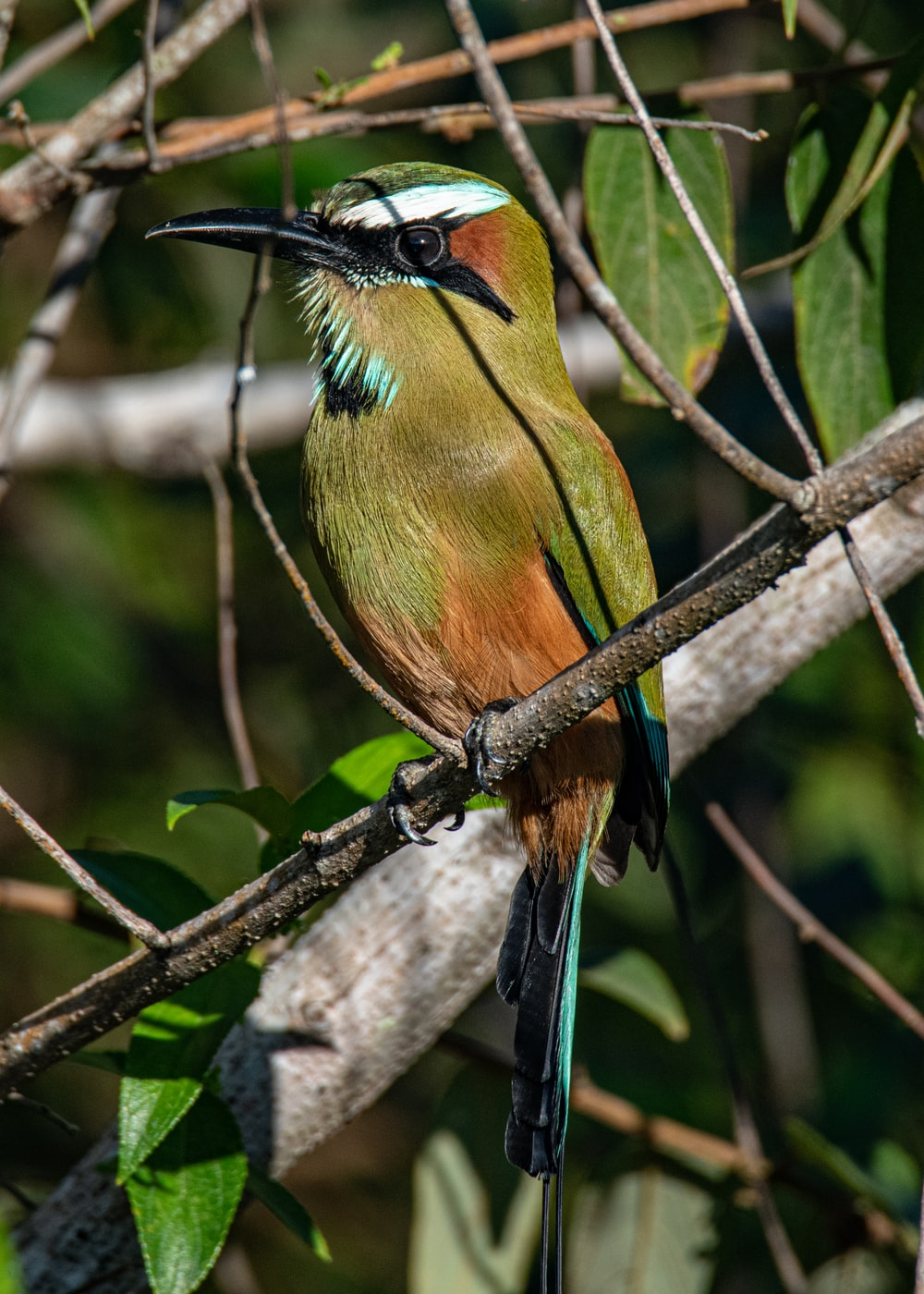 green and brown bird on brown tree branch during daytime