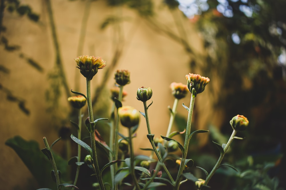 green flower buds during daytime