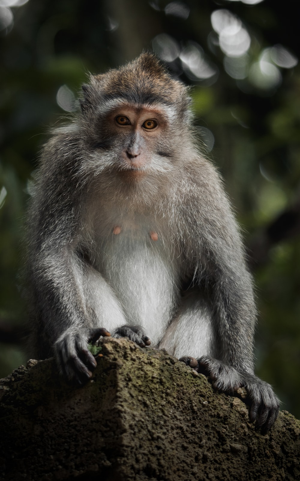 gray and white monkey on brown rock during daytime