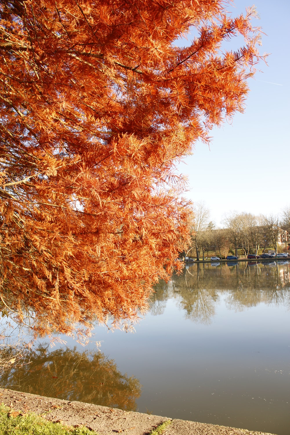 brown leaf trees near body of water during daytime