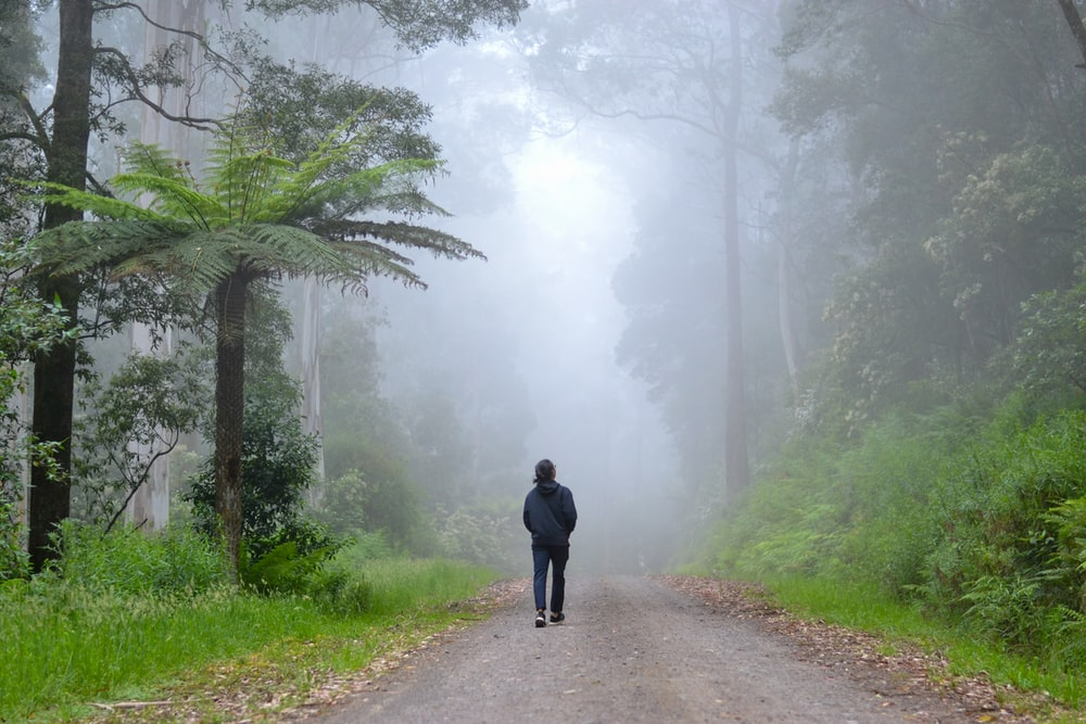 person in black jacket walking on pathway between green trees during foggy weather
