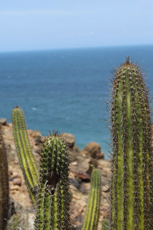 green cactus near blue sea during daytime