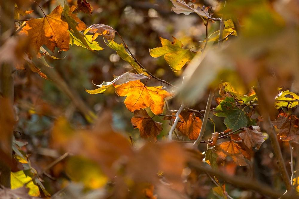 brown and green leaves in tilt shift lens