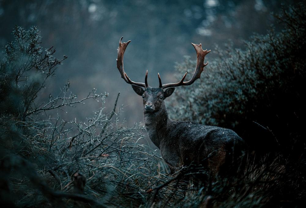 gray deer on green grass during daytime
