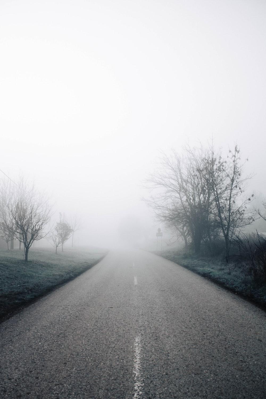 gray asphalt road between bare trees