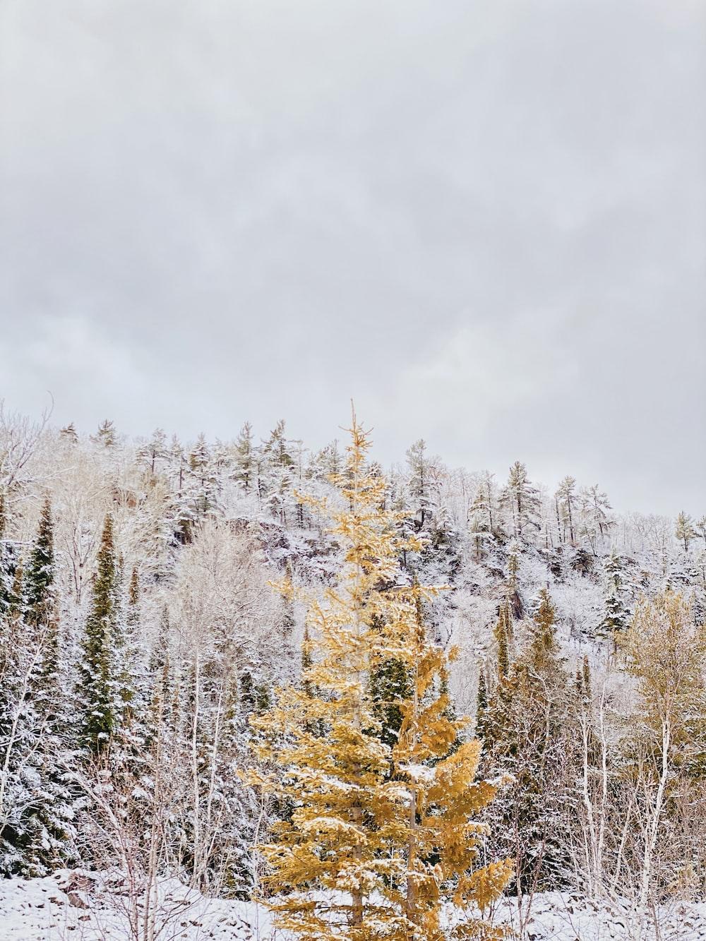 snow covered trees under white sky during daytime